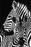 GB Eye Ltd, Zebra, Black and White, Maxi Poster