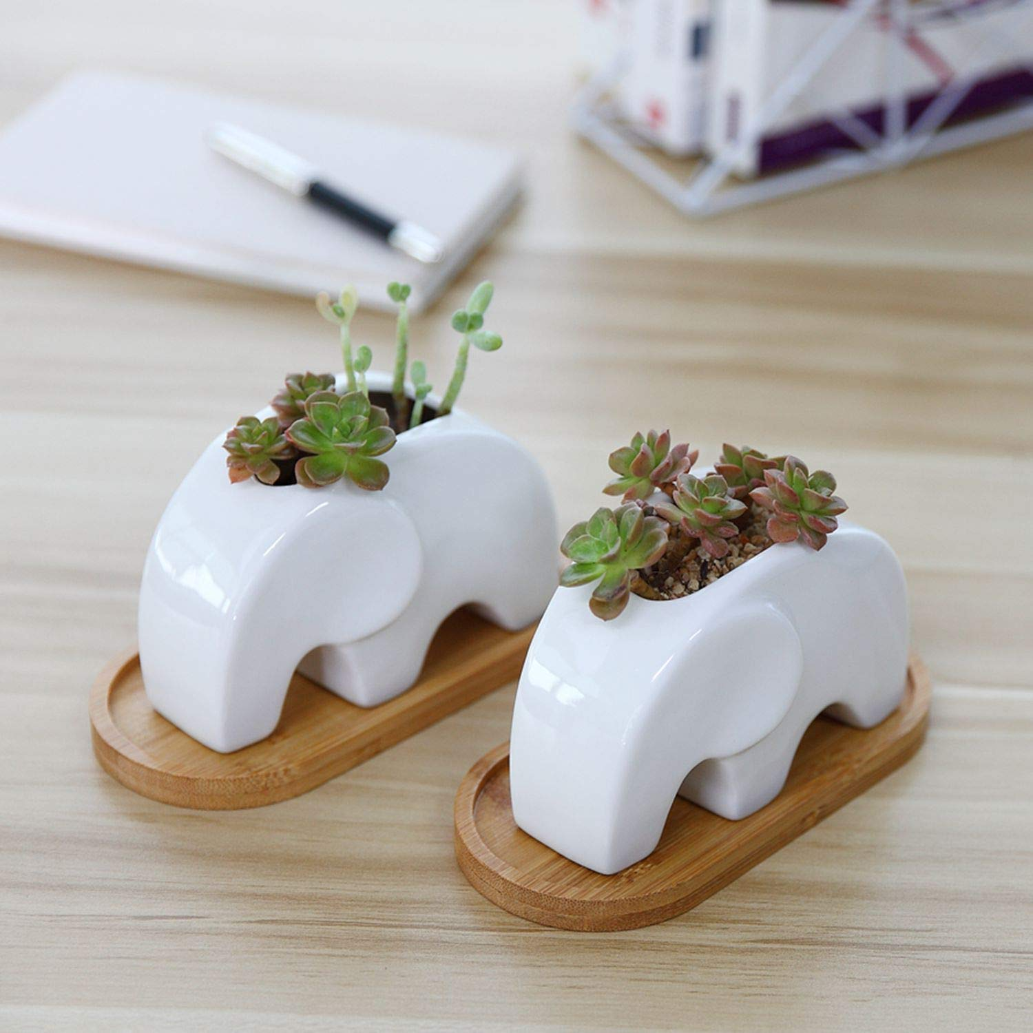 T4U Succulent Plant Pot Cactus Ceramic Planter with Bamboo Tray Pack of 2-4.8'' Elephant, Small Container White Animal Window Box Decorative Ornament Office Desktop Wedding Birthday by T4U (Image #4)