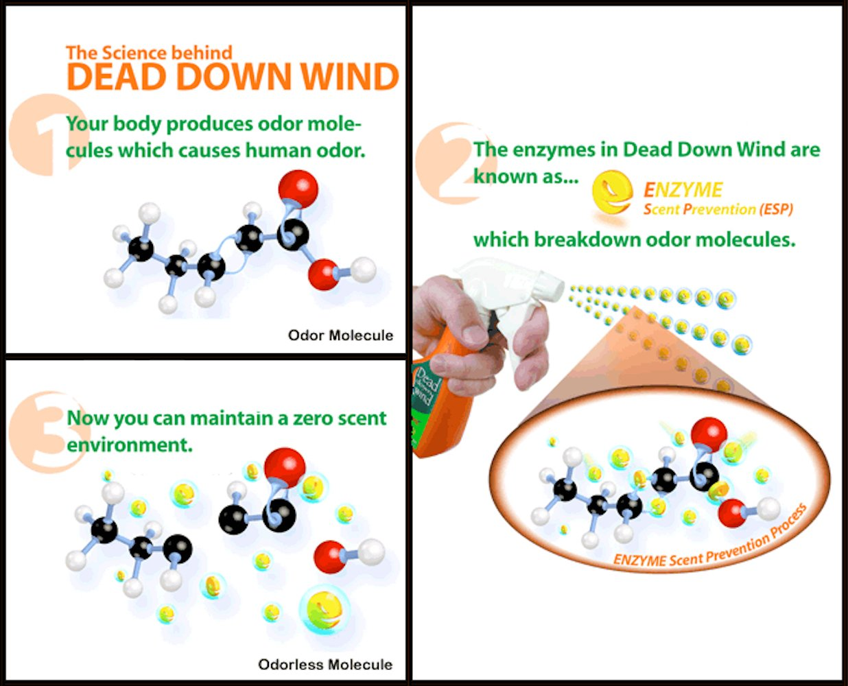 Amazon.com: Dead Down Wind Antiperspirant (2.25 Ounce): Sports & Outdoors
