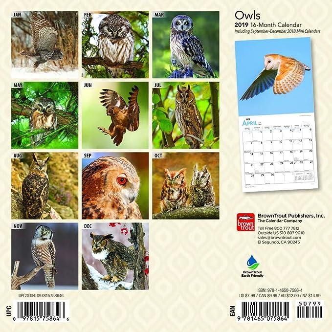 Owls Calendar 2019 Set - Deluxe 2019 Owls Mini Calendar with Over 100  Calendar Stickers (Owls Gifts, Office Supplies)