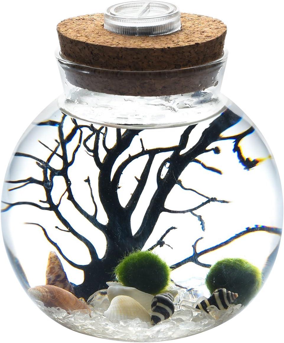 Healifty Moss Stone Vivid Moss Balls Decorative Balls Simulation Balls for Terrarium Aquariums Glass Jar Decoration 12pcs