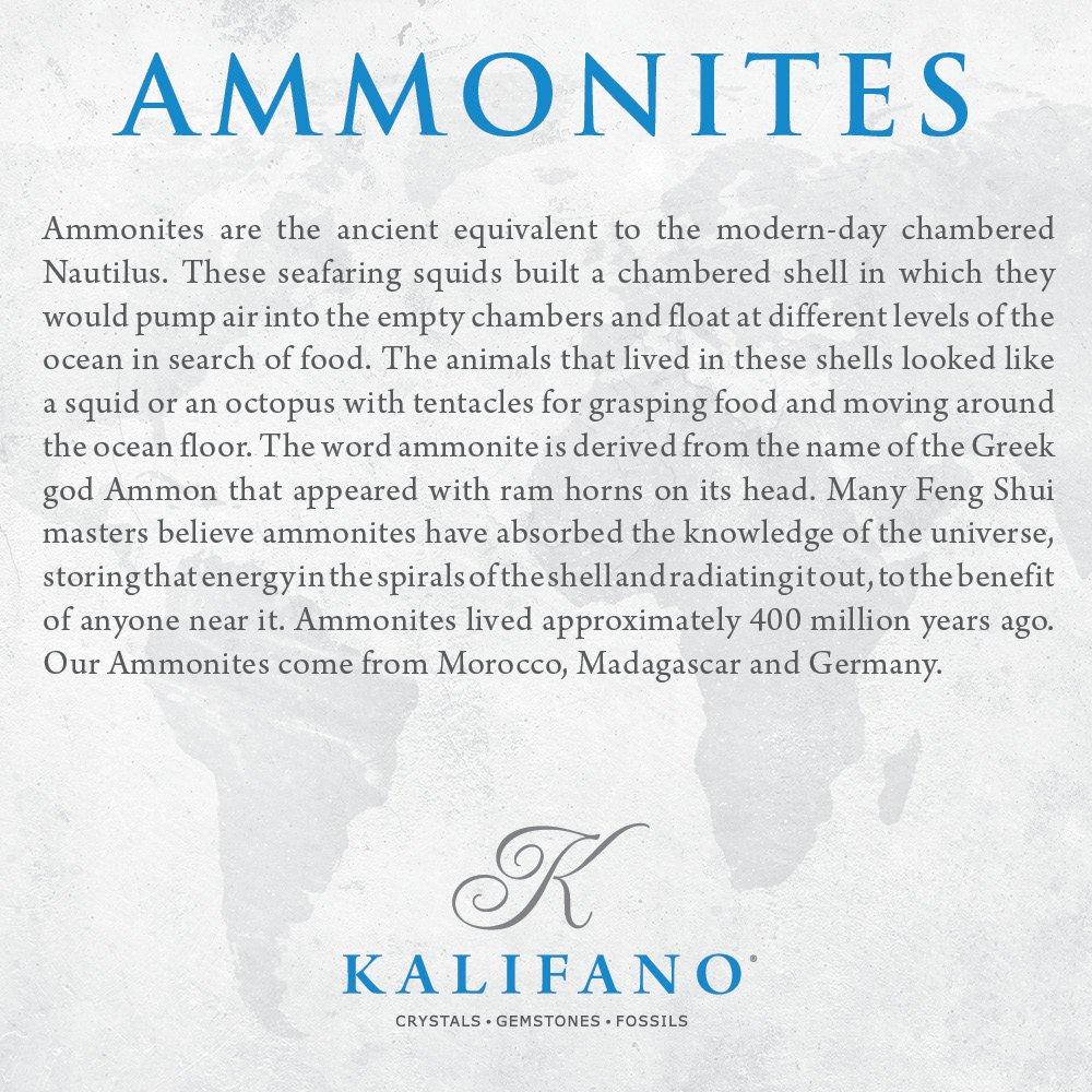 KALIFANO Extinct Natural Ammonite Shell Pair Fossil Stone - Madagascar by ALEXANDER KALIFANO (Image #5)