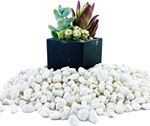 ROOFOO 1.6LB Mini White Natural River Pebbles Rocks Stones Garden Gravel Vase Fillers for Aquarium,Fish Tank,Terrarium, Fairy Gardening,Top Dressing,Bonsai,Zen Garden,Air Plants Succulent,Soil Cover