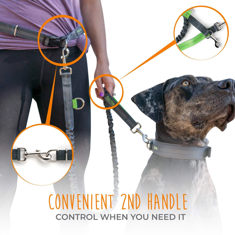 Premium Running Dog Leash Lightweight Reflective Bungee Dog Leash Mighty Paw Hands Free Dog Leash