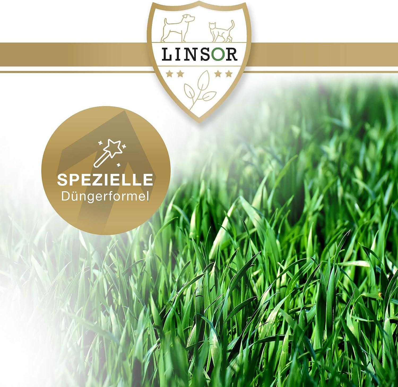 1 kg de variedades de hierba cortas C/ésped Linsor 25/% menos de corte crecimiento denso y gran capacidad de carga