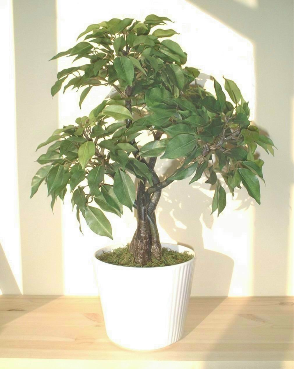 Ficus Albero (44cm) - Pianta Artificiale (SENZA VASO) Neuhaus Decor