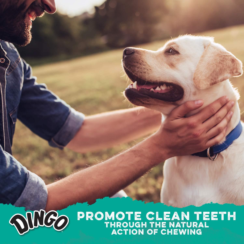 Dingo Dental Mintz Chews For Dogs, Mint Dog Treats by Dingo (Image #6)