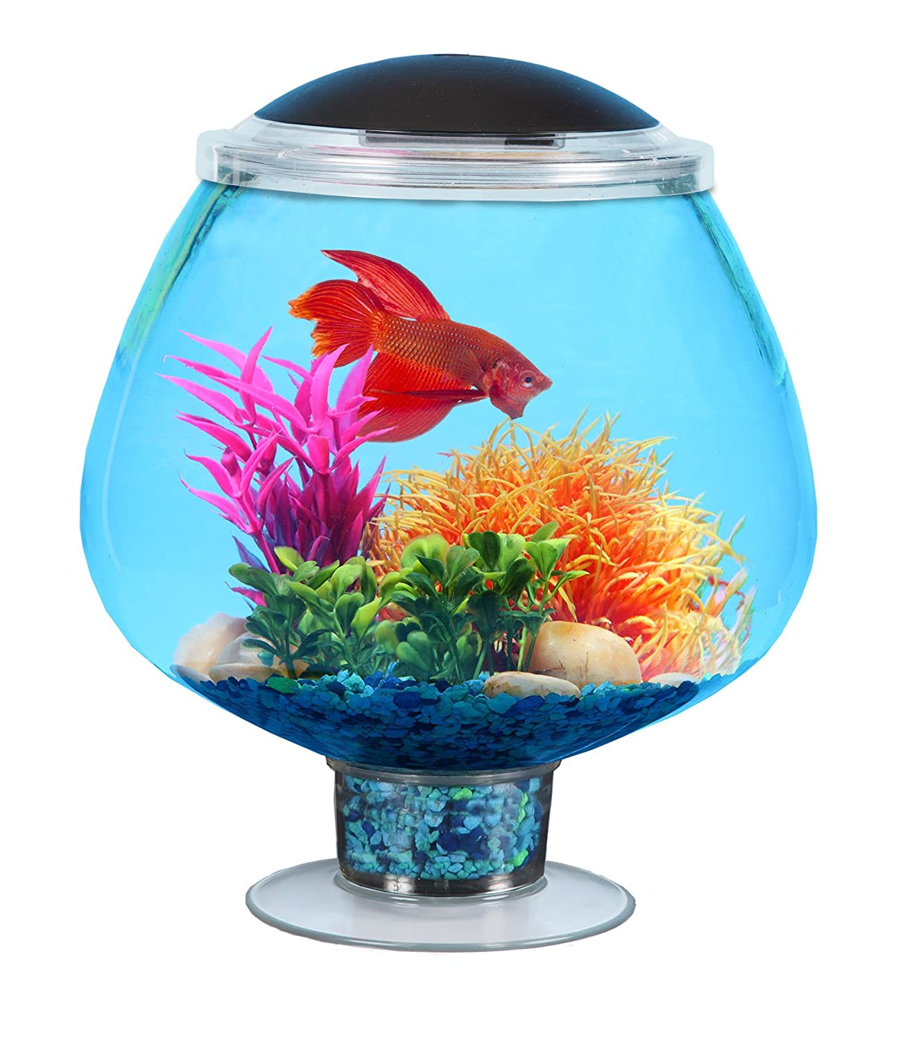 Kollercraft API Betta Kit Stemware Fish Tank, 1.7-Gallon