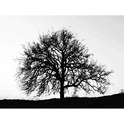 Amazon Wee Blue Coo Photography Tree Silhouette Black White Stark Unframed Wall Art Print Poster Home Decor Premium Kitchen