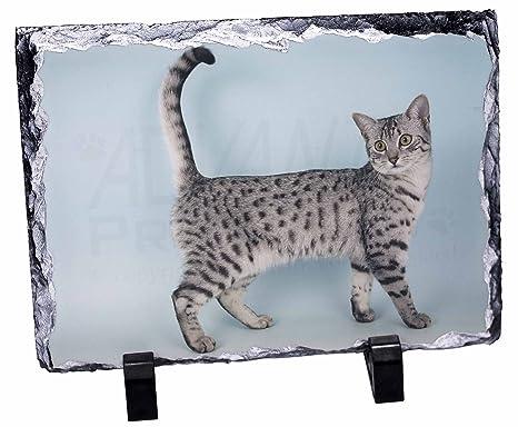 Mau egipcio gato foto pizarra adorno regalo de Navidad