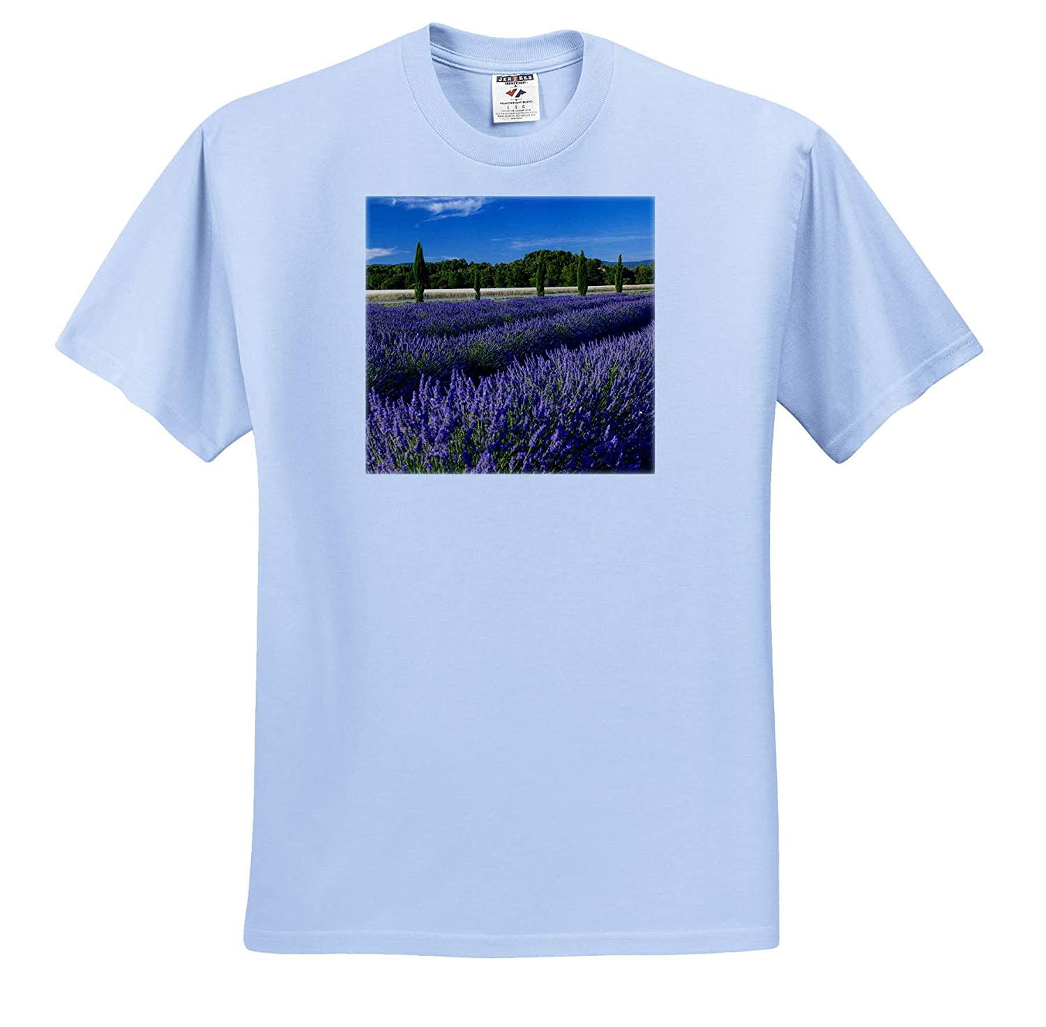 3dRose Danita Delimont ts/_313107 Adult T-Shirt XL Provence Provence France Rows of Lavender