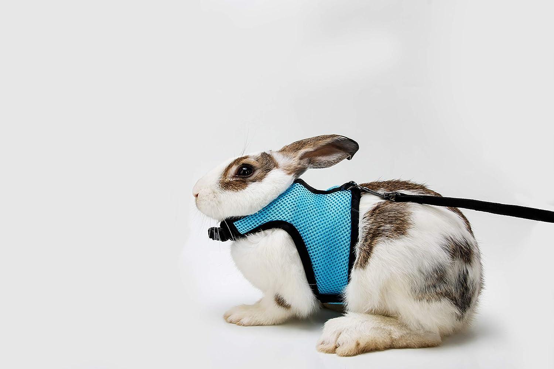 Light bluee Soft Rabbits Harness with Leash-Brand BOBO (Light bluee)