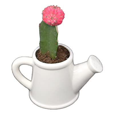 Flower Pot for House Plants-Plant Pots for Indoor & Outdoor Use (Watering Can) by Arad : Garden & Outdoor