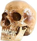 S24.5074 Menschlicher Schädel, antikes Finish
