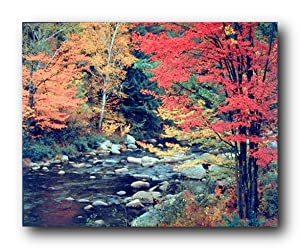 Red Trees in Forest with Stream Landscape Scenery Wall Decor Art Print Poster (16x20)