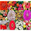 Big Pack 2 000 Zinnia Rainbow Mix Flower Seeds By Myseeds Co Big Pack Zinnia Mix