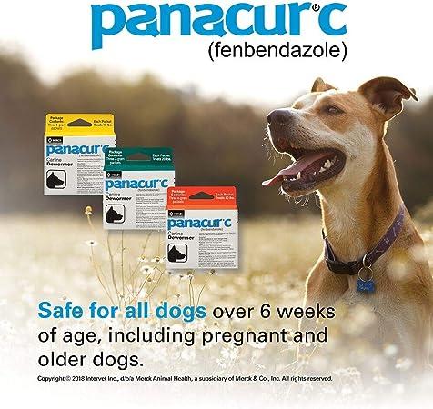 Panacur giardia. Giardiosis kutyákban és macskákban - Hungarovet Tudásbázis