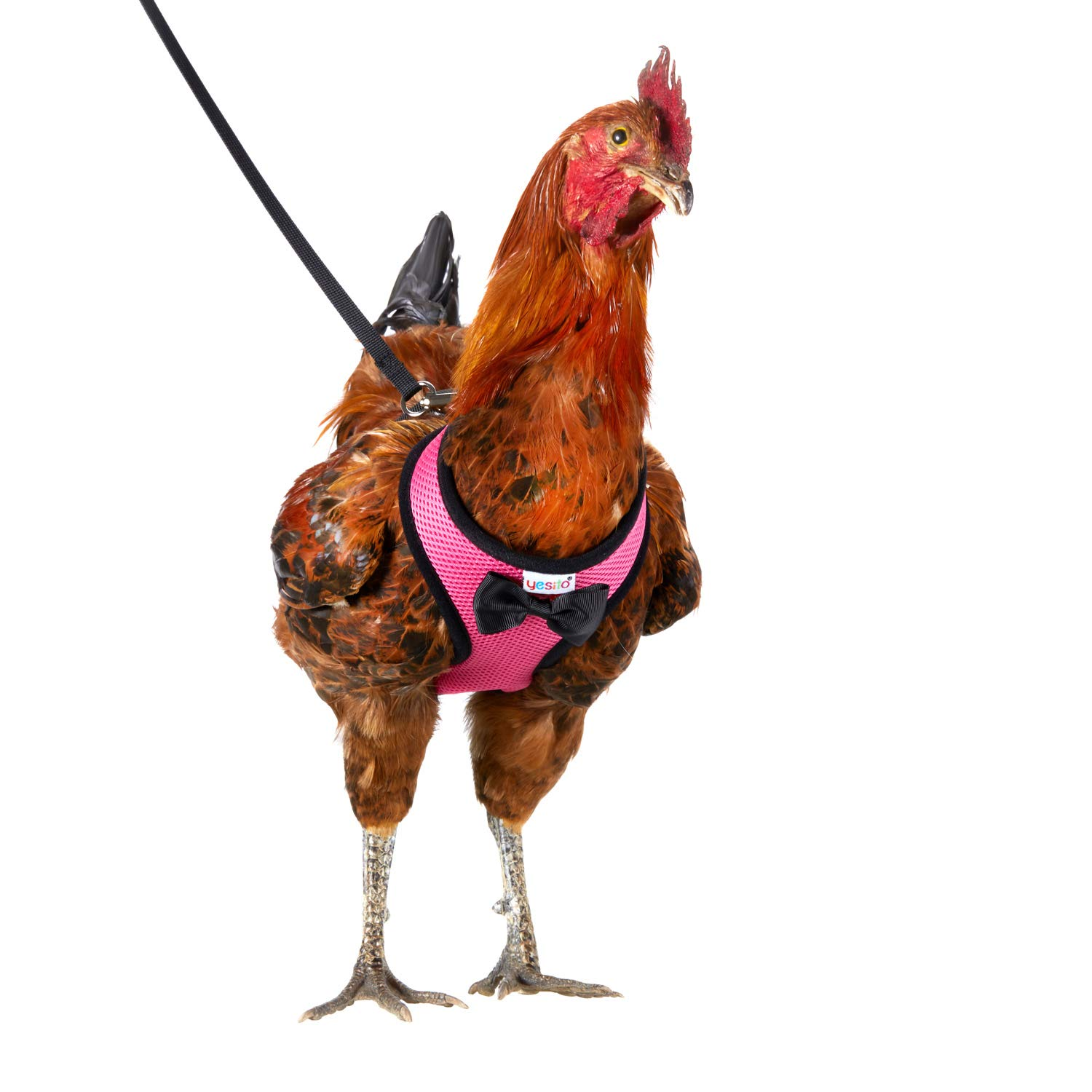 Yesito Chicken Harness Hen Size With 6ft Matching Leash - Adjustable, Resilient, Comfortable, Breathable, Small, Suitable for Chicken Weighing about 2.2 Pound,Pink