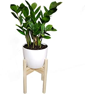 ZZ Plant w Self-Watering Pot & Handmade Stand - Live Plant