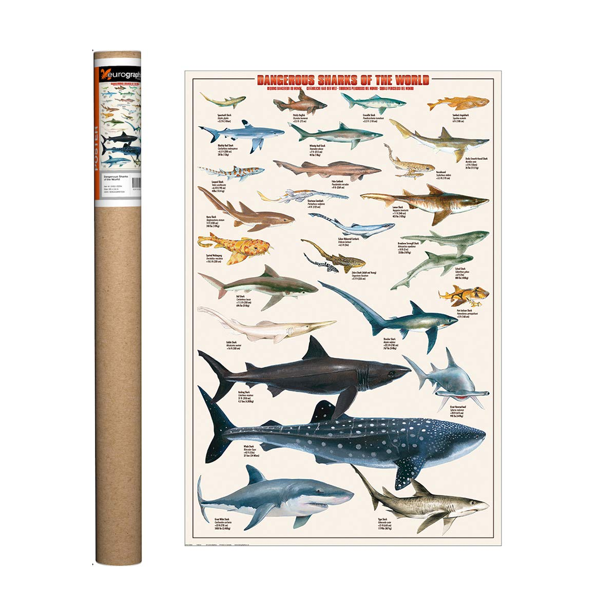 EuroGraphics Dangerous Sharks Poster, 36 x 24 inch
