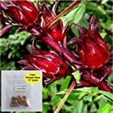 Organic Hibiscus sabdariffa-Roselle Seeds: Non-GMO, 350+ Seeds Packet, Red Big flower by Organic Farm