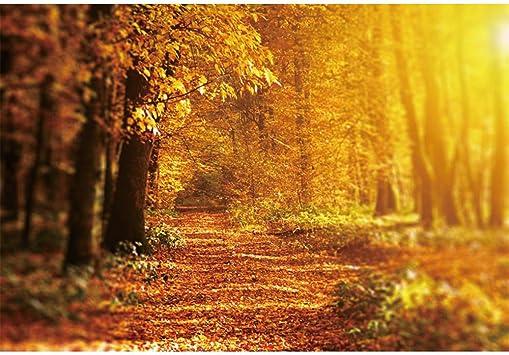 Amazon Com Haoyiyi 7x5ft Autumn Scenery Backdrop Fallen Maple