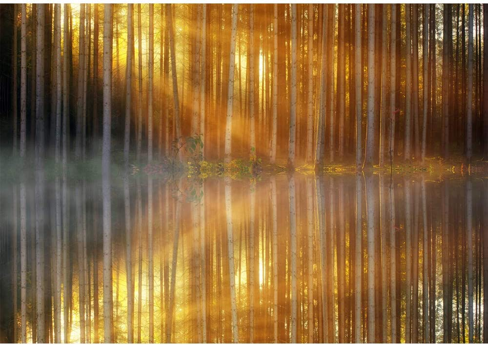 7x5 Nature Landscape Background for Photography Gold Sunshine White Forest Tree Photo Backdrop Crystal Clear Lake Water Background for Wall Art Tapestry