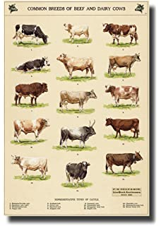 common breeds of beef and dairy cows Canvas Wall Art Beautiful Picture Prints living Room Bedroom
