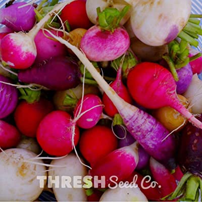 Easter Egg Radish - 150 Seeds : Garden & Outdoor
