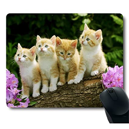 Amazoncom Four Cute Baby Cat Kitten Stand With Flower Customized
