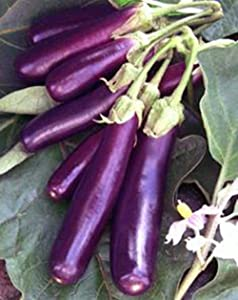 Eggplant , Long Purple Eggplant Seeds, Heirloom, Non GMO, 25 Seeds, Garden Seed, Long Purple, Heirloom, Non GMO, 25+Seeds, Garden Seed