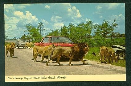 Lion Safari West Palm Beach Hours