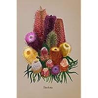 Banksia: Lined Writing Notebook, Floral Design Journal, Botanical Flower Illustration