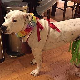 Amazon com : Rasta Imposta Hula Dog Costume, Small : Pet