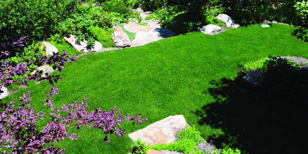 Kentucky Bluegrass Seed: Blue Ribbon Blend (5000 sq ft) by Nature's Seed