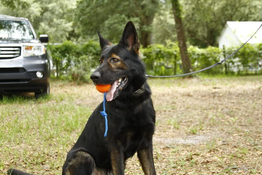 Nero Ball Classic K9 Ball on a Rope