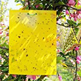 Reayouth 10 Pack Yellow Sticky Traps, Dual-Sided, 15x20cm, Fly Trap with Twist Ties for Capture Insects Like Gnats…