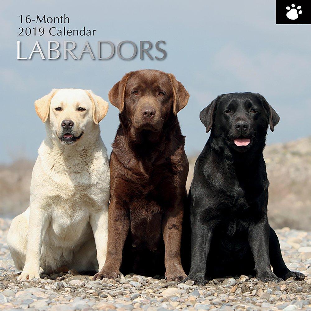 2019 Labradors - 30 X 30 Cm Calendario Della Parete In Inglese The Gifted Stationary
