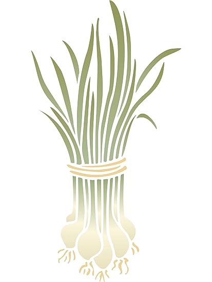 Amazon scallions stencil size 65w x 12h reusable scallions stencil size 65w x 12h reusable spring onions mightylinksfo