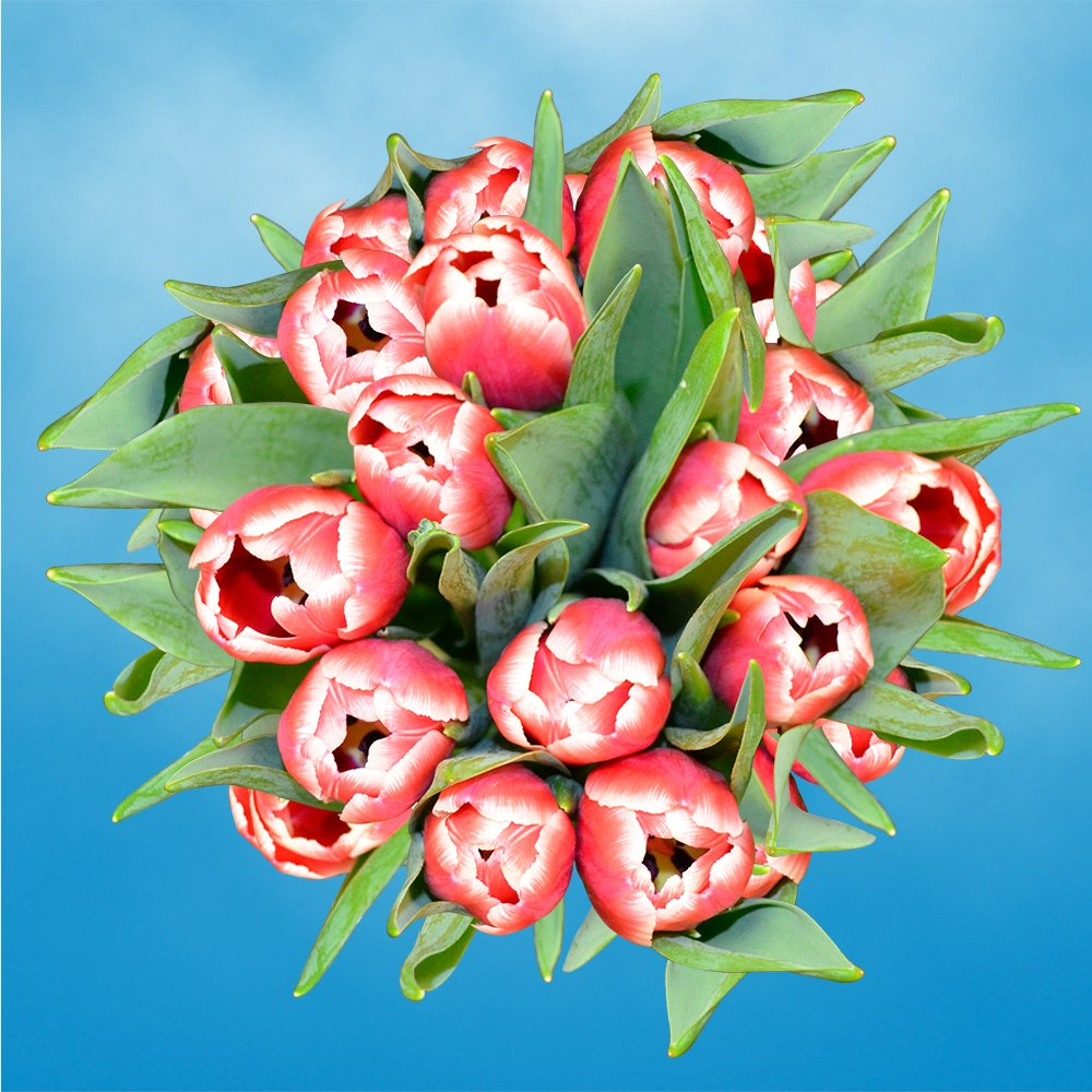 GlobalRose 30 Stems of Red and White Bicolor Tulips Flowers - Fresh Flowers for Delivery by GlobalRose (Image #1)