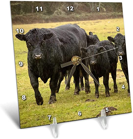 3dRose Skagit Valley, Washington State. Cows in The Rain. – Desk Clock, 6 by 6-Inch dc_206464_1