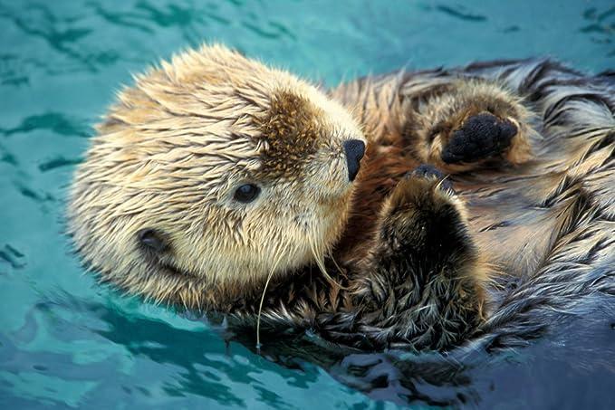 Sea Otter bis Schließen: Amazon.de: Lebensmittel & Getränke