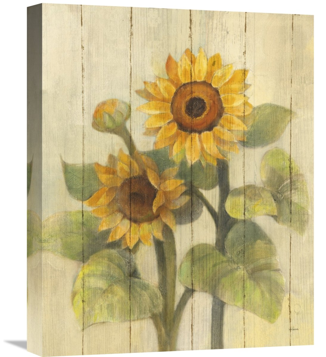 Global GalleryAlbena Hristova Summer Sunflowers II on Barn Board Giclee Stretched Canvas Artwork 16 x 20