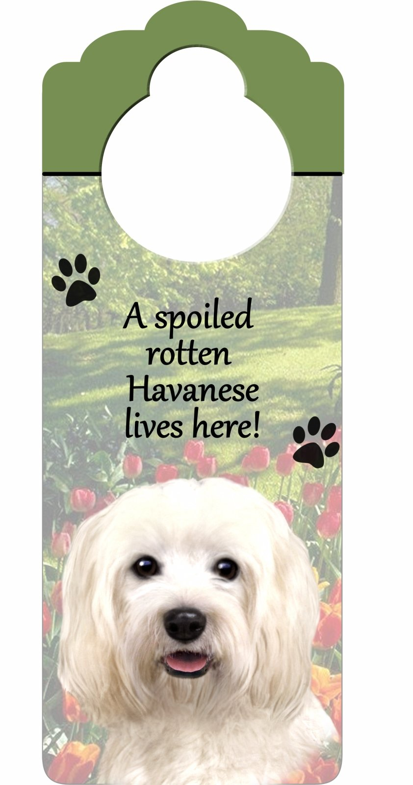 Havanese Wood Sign ''A Spoiled Rotten Havanese Lives Here''with Artistic Photograph Measuring 10 by 4 Inches Can Be Hung On Doorknobs Or Anywhere In Home