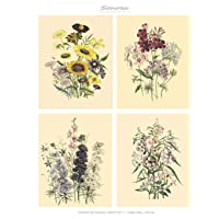 Vintage Botanical Prints Set 1 Home Wall Decor: Botanical Illustrations, Set of 6 Unframed Portrait 8x10 Posters…
