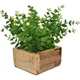Fancy Mart Artificial Plant Hackleberry Bush (Size 8 Inchs/ 20 Cms) In Natural Wood Pot-1306