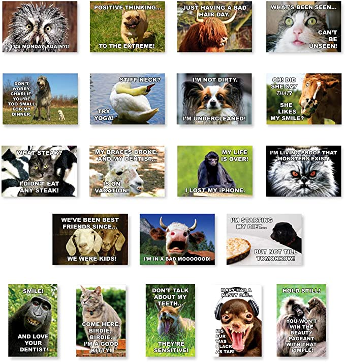 20 Animal Mix postcards pack of pretty new set cute /& funny wildlife pictures