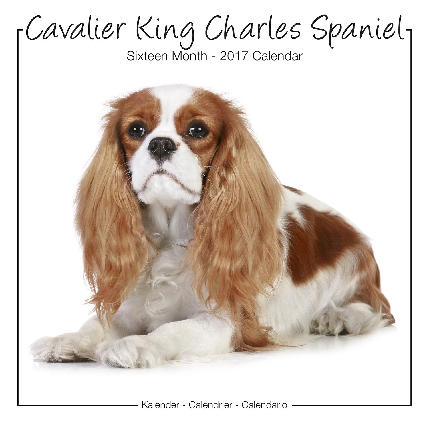 Cavalier king charles spaniel calendar dog breed calendars 2017 cavalier king charles spaniel calendar dog breed calendars 2017 dog calendar calendars 2016 2017 wall calendars 16 month wall calendar by avonside nvjuhfo Image collections