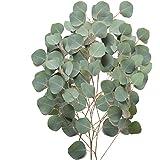 Farm Fresh Natural Silver Dollar Eucalyptus - Pack 40