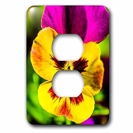 3drose alexis photography flowers pansy yellow and pink pansy 3drose alexis photography flowers pansy yellow and pink pansy flower macro photo mightylinksfo